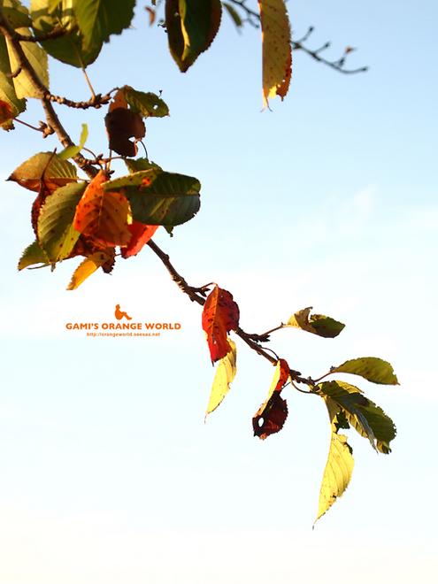 0429桜の紅葉1.jpg