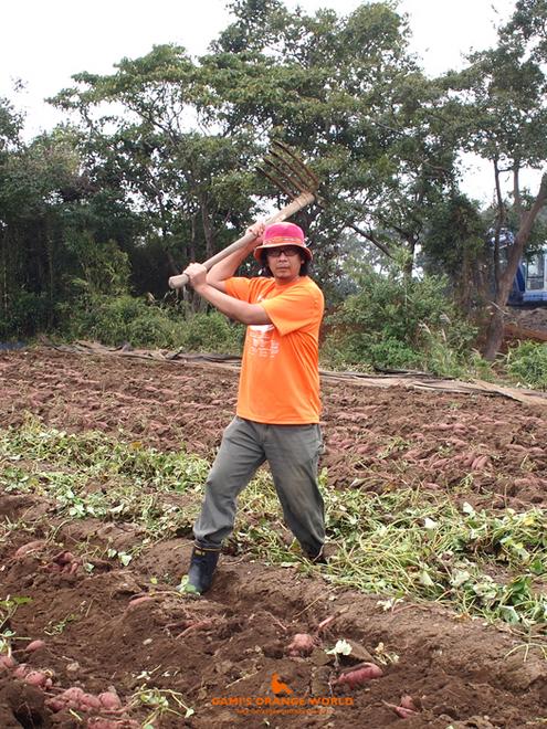 0435サツマイモ芋掘り1.jpg