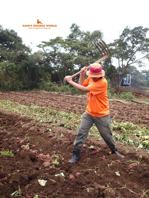 0435サツマイモ芋掘り5.jpg