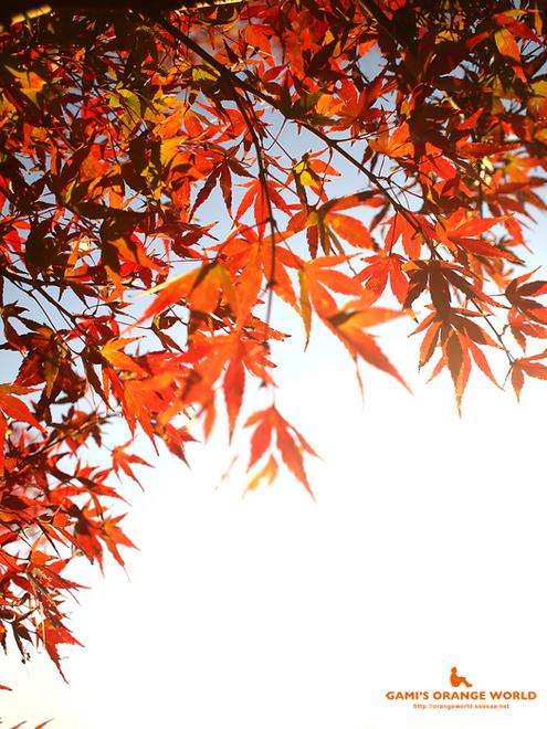 0447花田苑の紅葉2.jpg