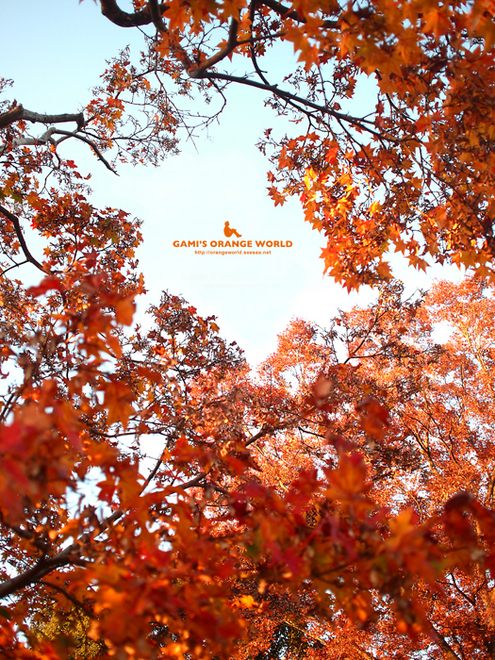0447花田苑の紅葉5.jpg
