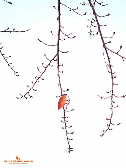 0458越谷の紅葉3.jpg