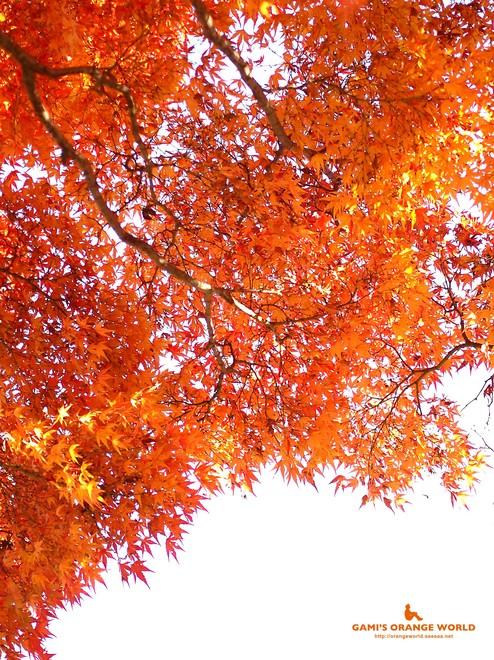 0460花田苑の紅葉11.jpg