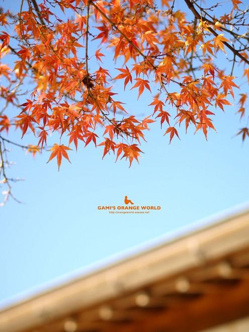 0460花田苑の紅葉13.jpg