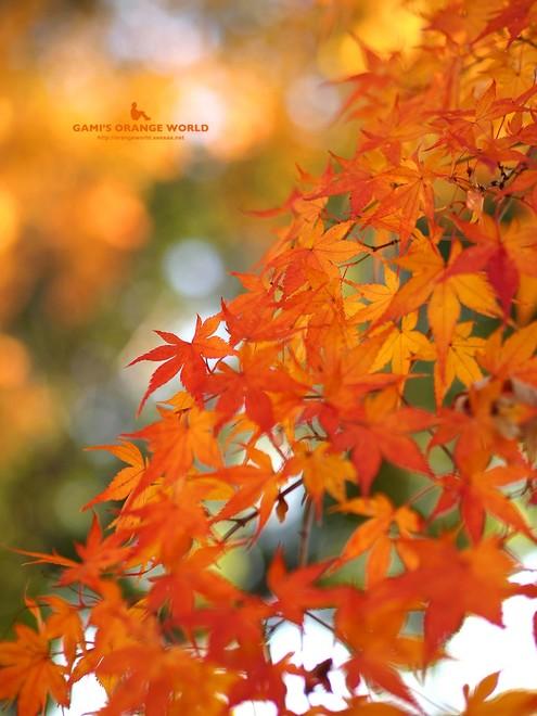 0460花田苑の紅葉9.jpg