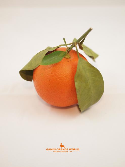 0477橙1.jpg