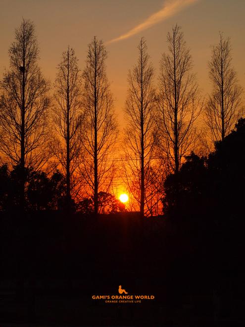 0488定使野橋から望む夕陽.jpg