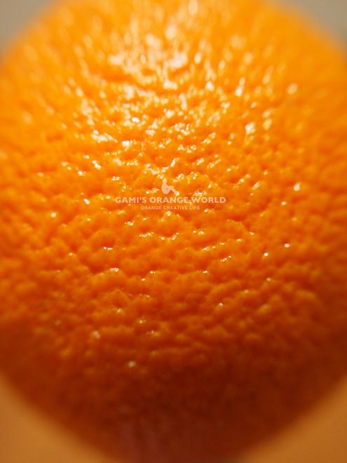 0516「オレンジ」という名前の由来2.jpg