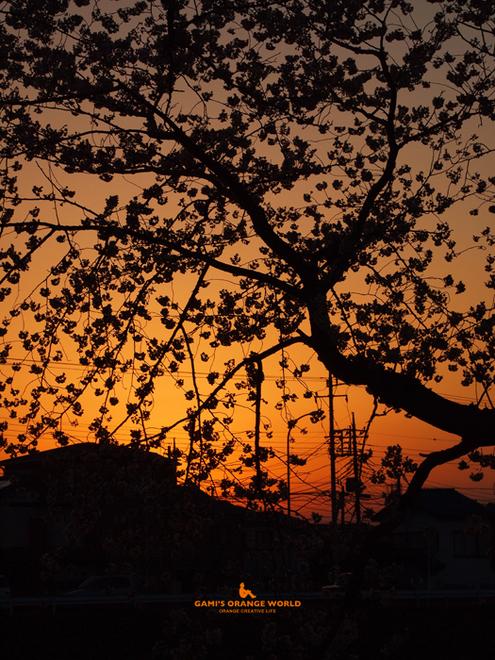 0566桜越しの夕焼け1.jpg
