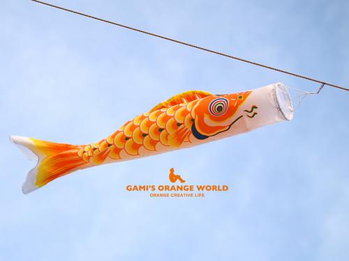 0585オレンジの鯉のぼり.jpg