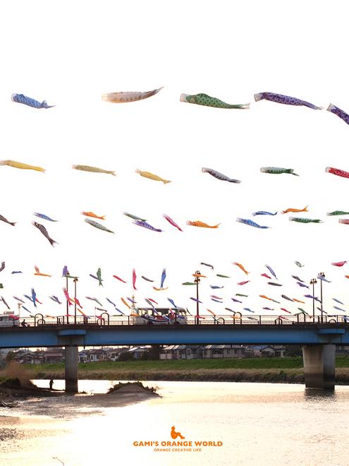 0585不動橋の鯉のぼり1.jpg