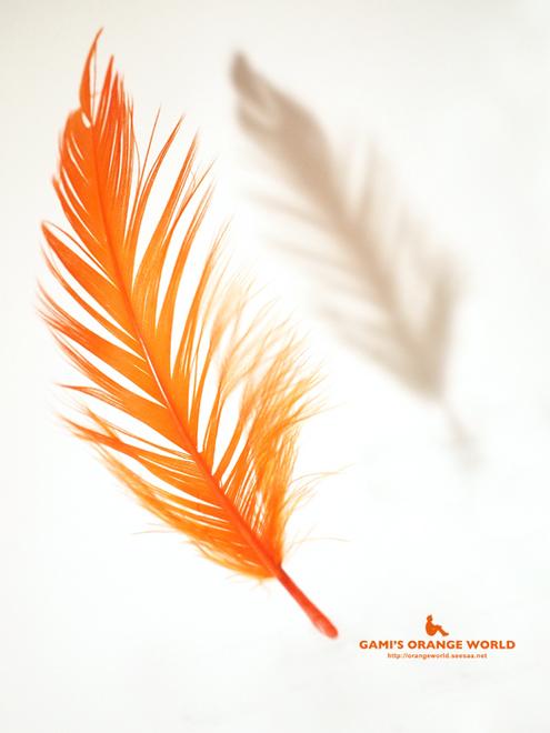 323オレンジの羽根1.jpg