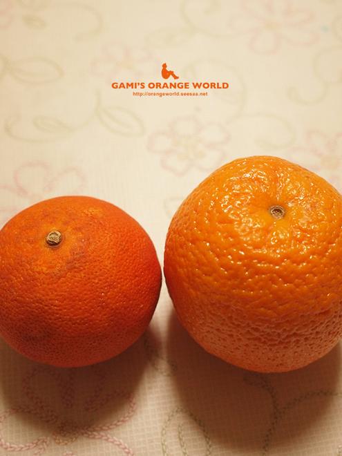5代目と6代目のオレンジ.jpg