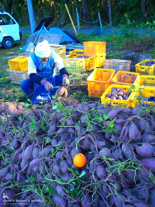 サツマイモとオレンジ2.jpg