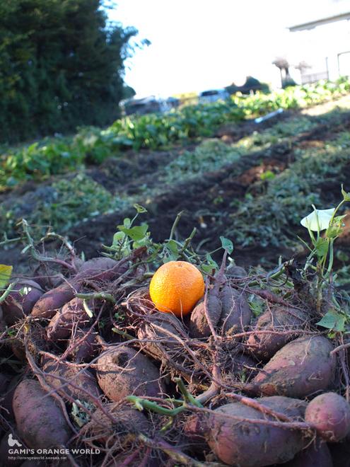 サツマイモとオレンジ3.jpg