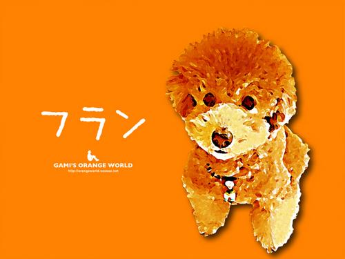 フラン3オレンジ.jpg