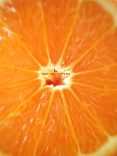 ミネオラオレンジ3.jpg