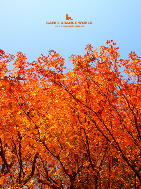 花田四丁目公園の紅葉6.jpg
