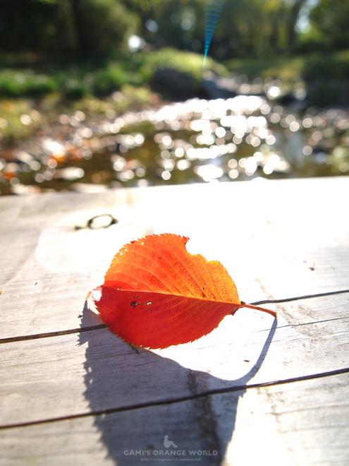 花田苑のオレンジの葉.jpg