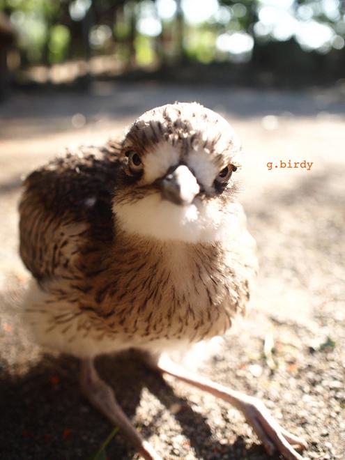 0427g.birdy1.jpg
