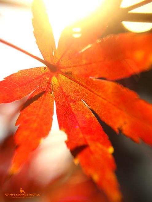 0447花田苑の紅葉1.jpg