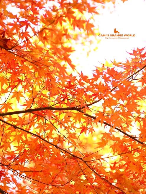 0460花田苑の紅葉4.jpg