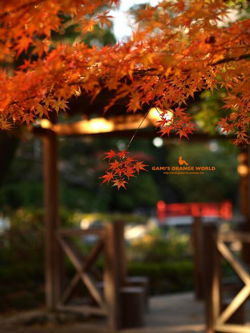 0463久伊豆神社の紅葉1.jpg