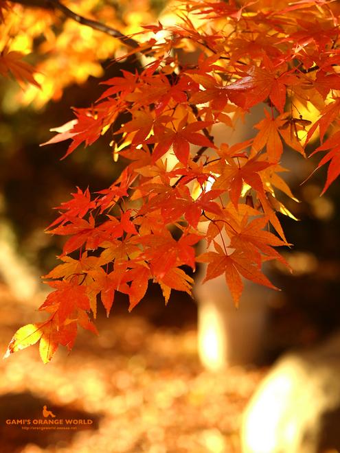 0463久伊豆神社の紅葉2.jpg