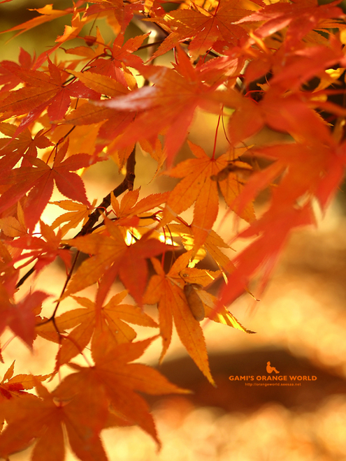 0463久伊豆神社の紅葉3.jpg