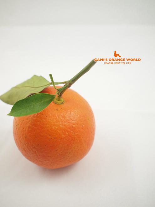 0477橙2.jpg