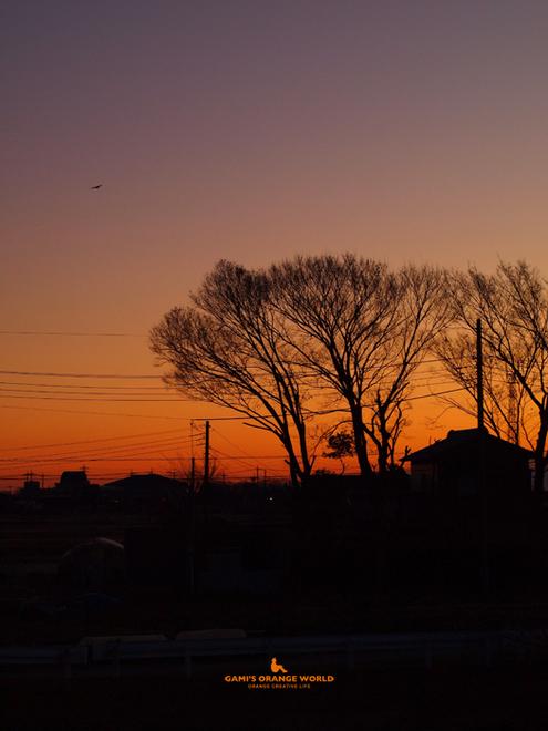 0485越谷の朝焼け2.jpg