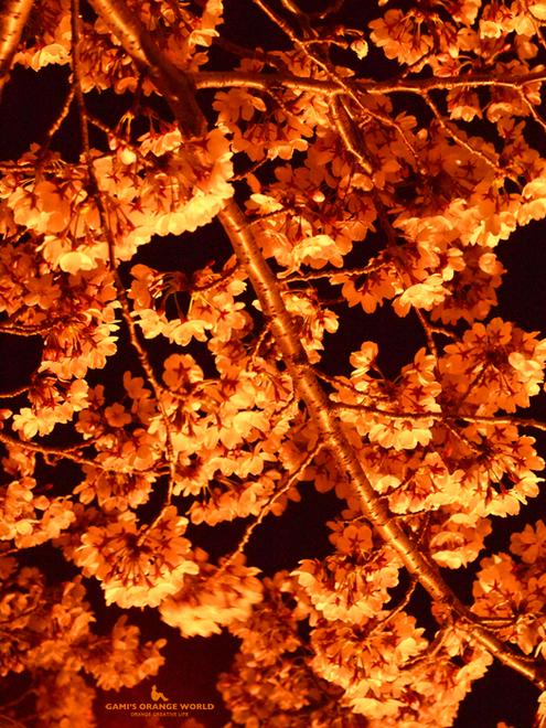 0572オレンジ夜桜.jpg