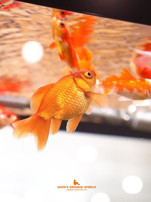 0577金魚1.jpg