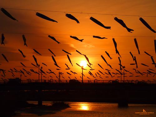 0580夕焼けを泳ぐ鯉のぼり横.jpg