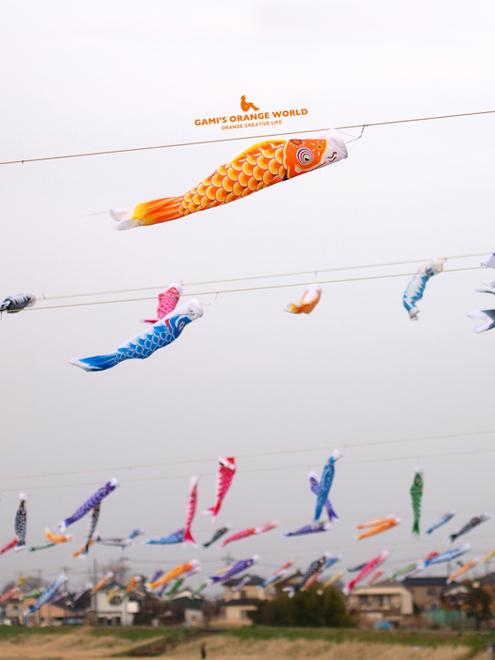 0585不動橋の鯉のぼり2.jpg