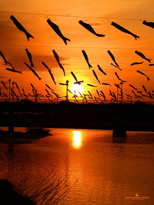 0586夕焼けを泳ぐ鯉のぼり縦.jpg