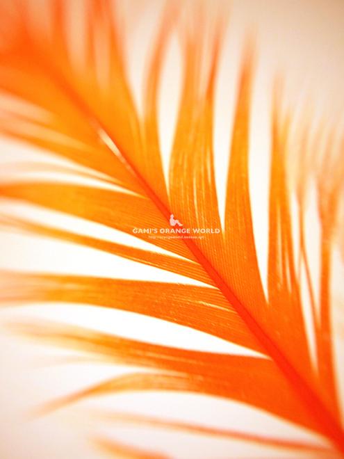 323オレンジの羽根3.jpg