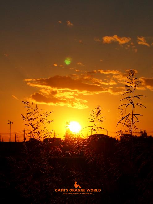 越谷の夕日5.jpg