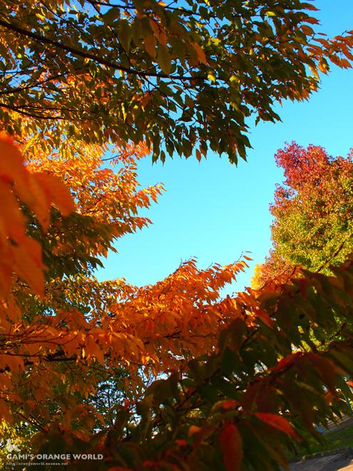 越谷の紅葉3.jpg