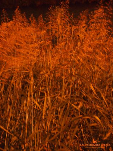 越谷の雑草.jpg
